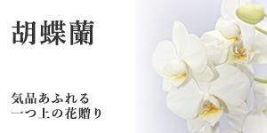 胡蝶蘭のご注文